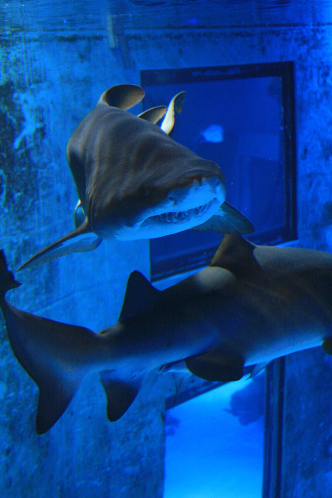 Sharks! And other sea creatures at London Aquarium