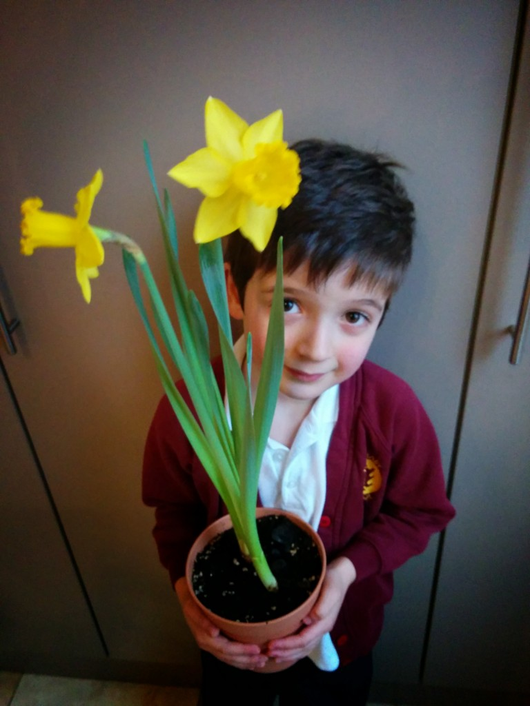 Duncan's daffodil