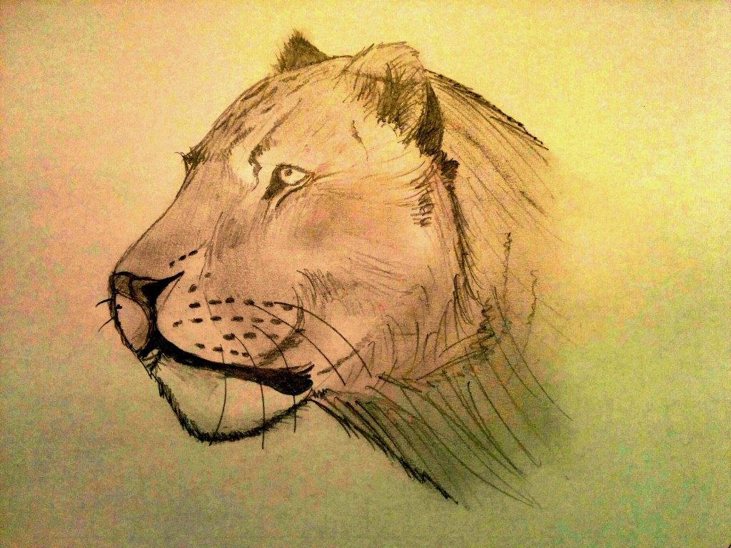 Lioness, by Daddy