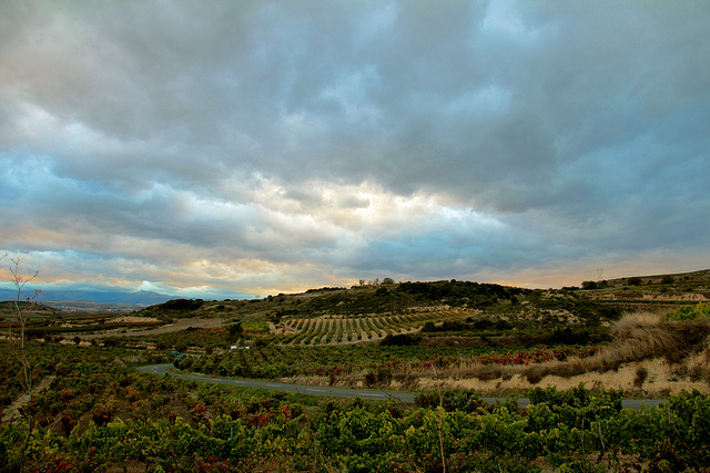 Ramon Bilbao vineyard visit