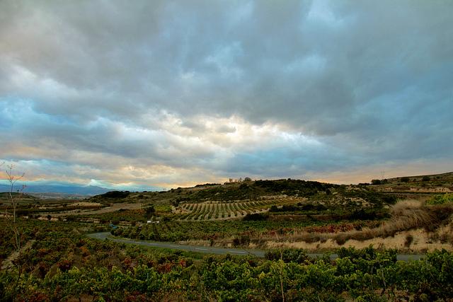 Ramon Bilbao vineyard visit