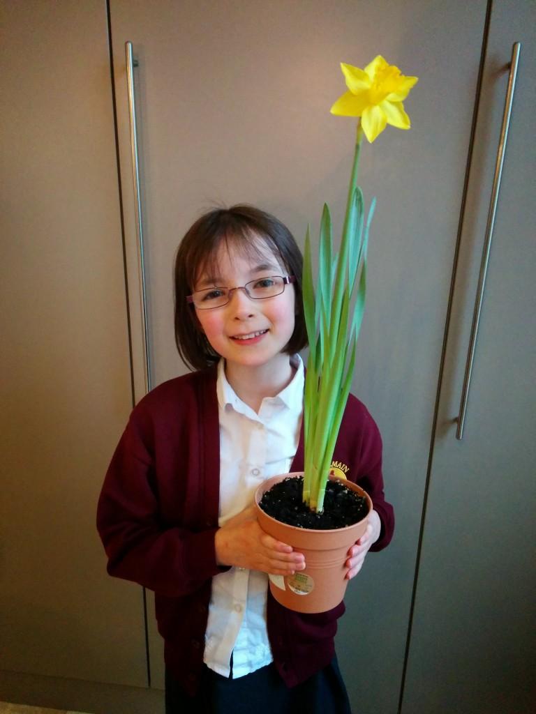Nona's daffodil