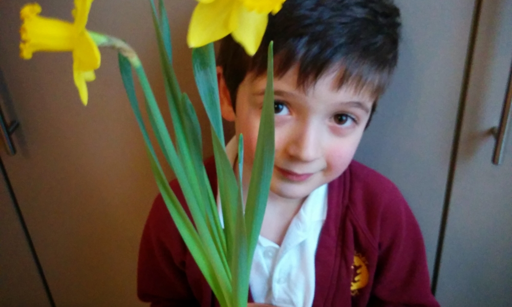School bulb competition