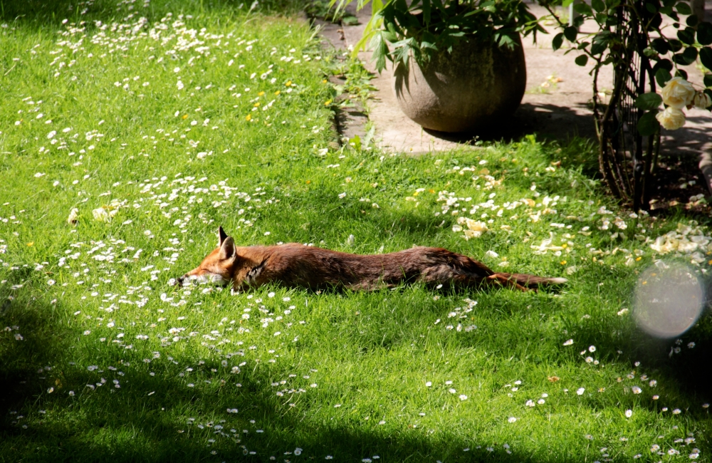 A good day to laze in the sun